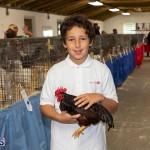 Bermuda Poultry Fanciers Society Fall Jamboree, November 9 2019-1226