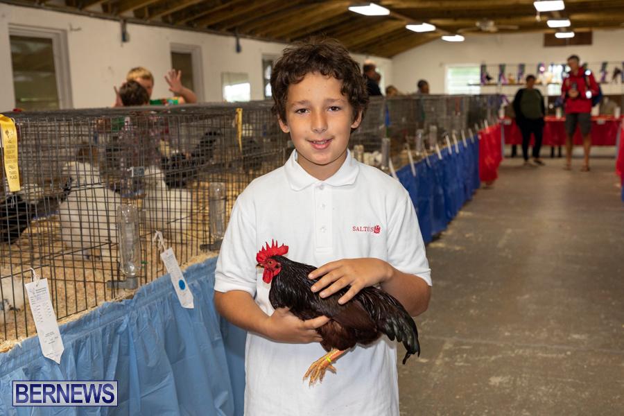 Bermuda-Poultry-Fanciers-Society-Fall-Jamboree-November-9-2019-1226