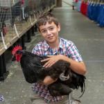 Bermuda Poultry Fanciers Society Fall Jamboree, November 9 2019-1236