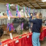Bermuda Poultry Fanciers Society Fall Jamboree, November 9 2019-1269