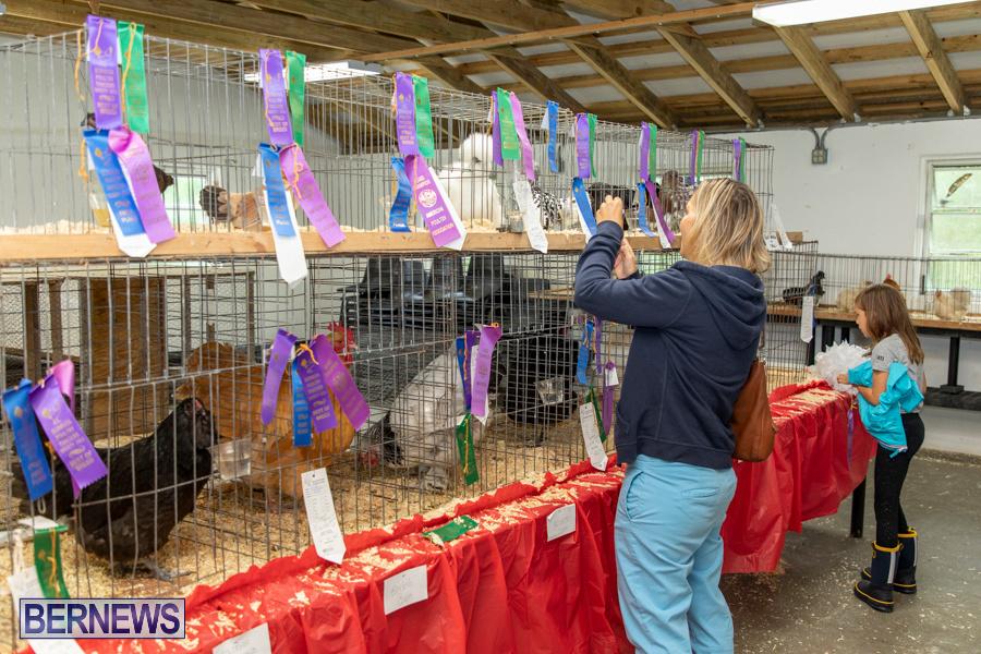 Bermuda-Poultry-Fanciers-Society-Fall-Jamboree-November-9-2019-1269