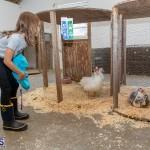 Bermuda Poultry Fanciers Society Fall Jamboree, November 9 2019-1271
