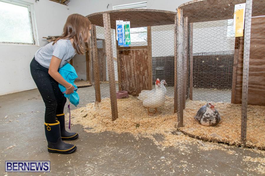 Bermuda-Poultry-Fanciers-Society-Fall-Jamboree-November-9-2019-1271