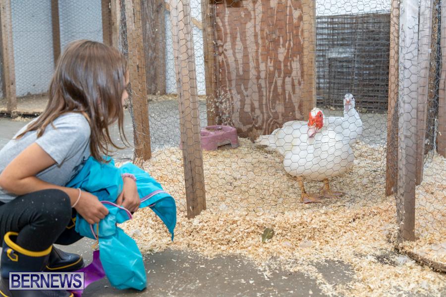 Bermuda-Poultry-Fanciers-Society-Fall-Jamboree-November-9-2019-1272