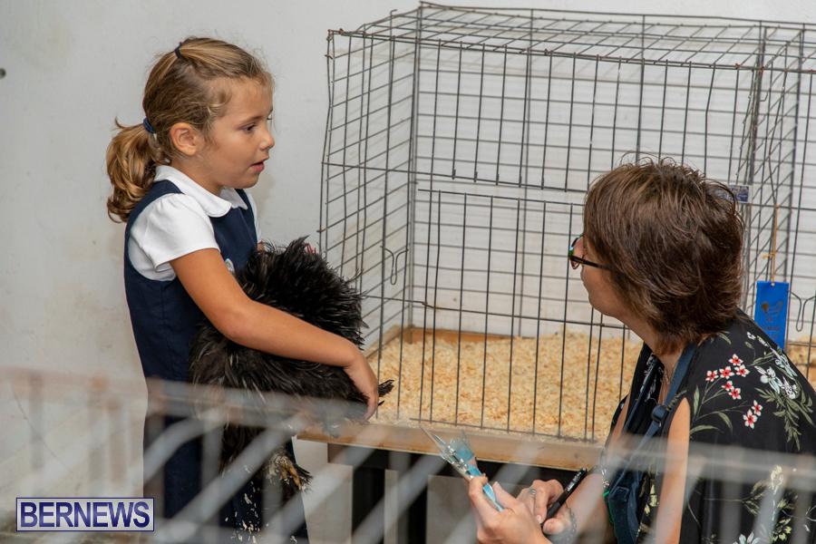 Bermuda-Poultry-Fanciers-Society-Fall-Jamboree-November-9-2019-1371