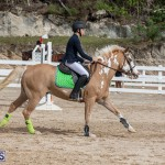 Caribbean Equestrian Association Regional Jumping Challenge Bermuda, November 16 2019-2099