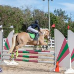 Caribbean Equestrian Association Regional Jumping Challenge Bermuda, November 16 2019-2125