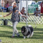 Devil's Isle All Breed Club 2019 Bermuda International Dog Shows Bermuda, November 2 2019-0482