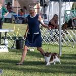 Devil's Isle All Breed Club 2019 Bermuda International Dog Shows Bermuda, November 2 2019-0504
