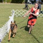 Devil's Isle All Breed Club 2019 Bermuda International Dog Shows Bermuda, November 2 2019-0521