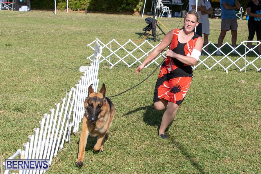 Devils-Isle-All-Breed-Club-2019-Bermuda-International-Dog-Shows-Bermuda-November-2-2019-0521