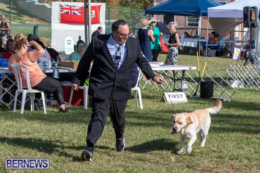 Devils-Isle-All-Breed-Club-2019-Bermuda-International-Dog-Shows-Bermuda-November-2-2019-0523