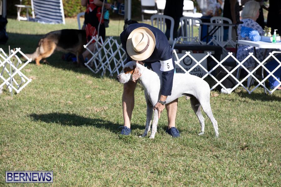 Devils-Isle-All-Breed-Club-2019-Bermuda-International-Dog-Shows-Bermuda-November-2-2019-0567
