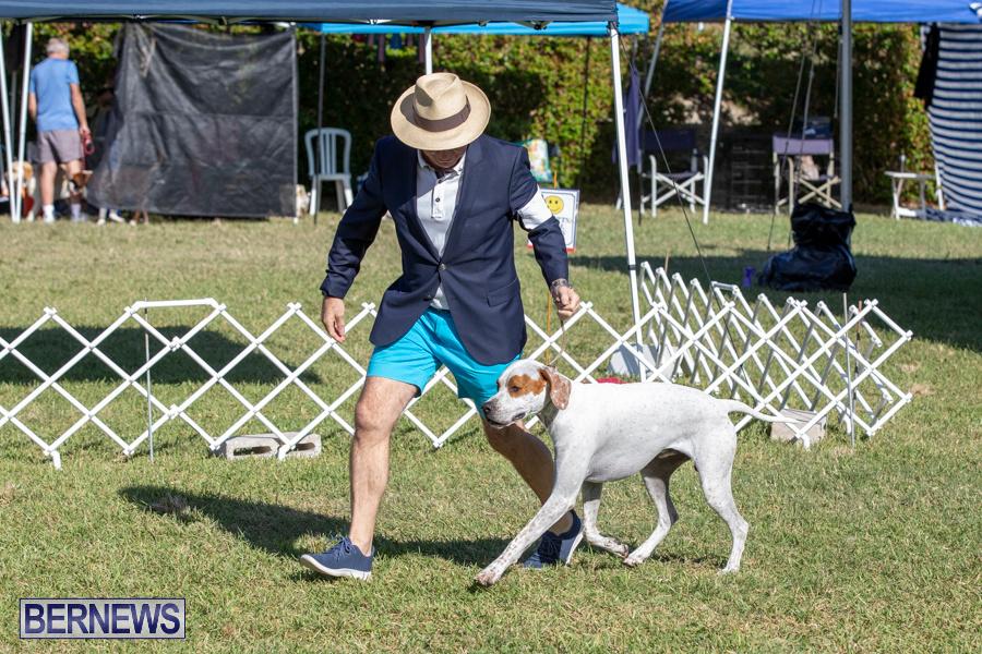 Devils-Isle-All-Breed-Club-2019-Bermuda-International-Dog-Shows-Bermuda-November-2-2019-0573