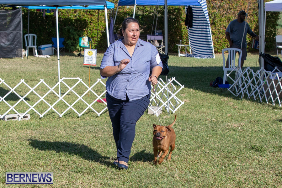 Devils-Isle-All-Breed-Club-2019-Bermuda-International-Dog-Shows-Bermuda-November-2-2019-0577