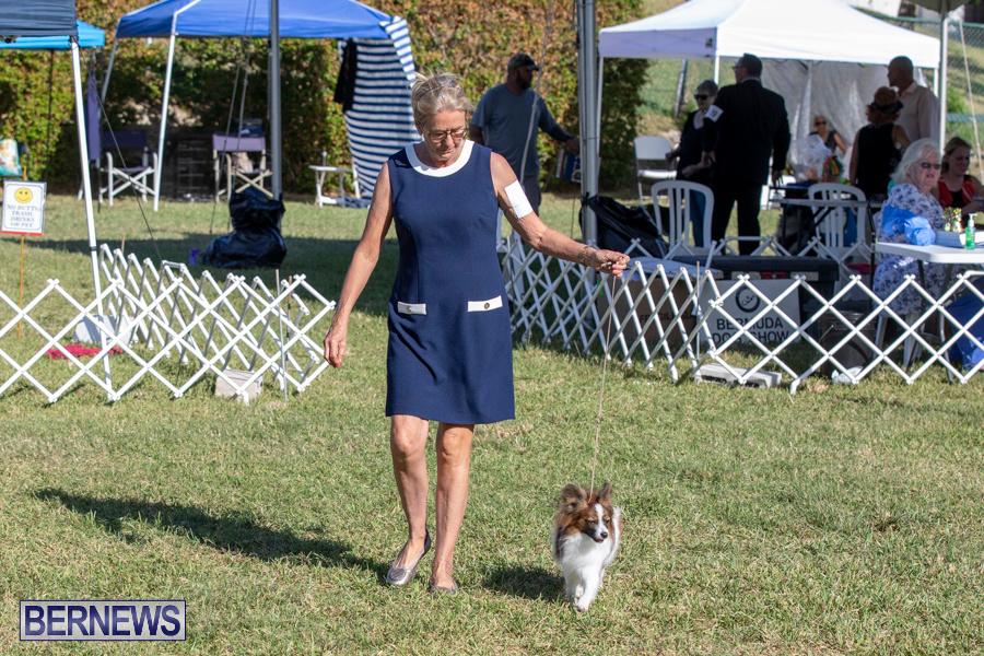 Devils-Isle-All-Breed-Club-2019-Bermuda-International-Dog-Shows-Bermuda-November-2-2019-0580
