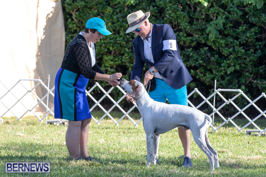 Devils-Isle-All-Breed-Club-2019-Bermuda-International-Dog-Shows-Bermuda-November-2-2019-0584