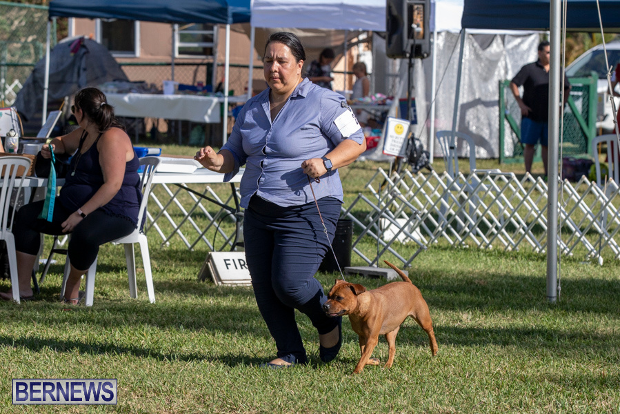 Devils-Isle-All-Breed-Club-2019-Bermuda-International-Dog-Shows-Bermuda-November-2-2019-0599