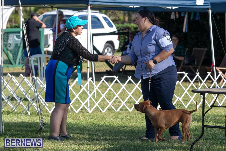 Devils-Isle-All-Breed-Club-2019-Bermuda-International-Dog-Shows-Bermuda-November-2-2019-0608