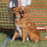 Devil's Isle All Breed Club 2019 Bermuda International Dog Shows Bermuda, November 2 2019-0611