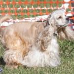 Devil's Isle All Breed Club 2019 Bermuda International Dog Shows Bermuda, November 2 2019-0618