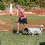 Devil's Isle All Breed Club 2019 Bermuda International Dog Shows Bermuda, November 2 2019-0659
