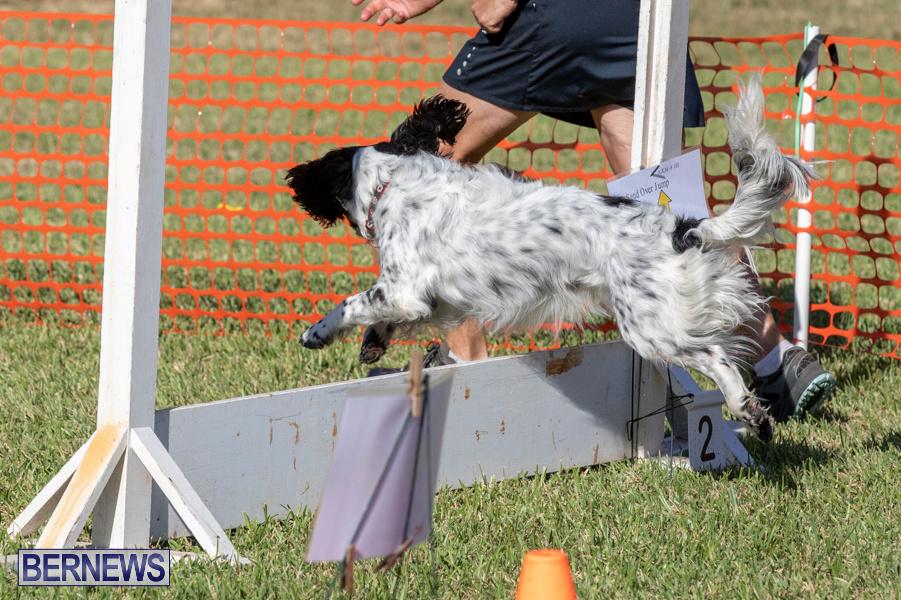 Devils-Isle-All-Breed-Club-2019-Bermuda-International-Dog-Shows-Bermuda-November-2-2019-0667