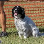 Devil's Isle All Breed Club 2019 Bermuda International Dog Shows Bermuda, November 2 2019-0674