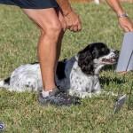 Devil's Isle All Breed Club 2019 Bermuda International Dog Shows Bermuda, November 2 2019-0681