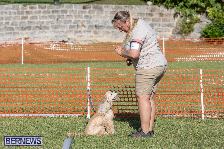 Devils-Isle-All-Breed-Club-2019-Bermuda-International-Dog-Shows-Bermuda-November-2-2019-0723