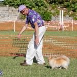 Devil's Isle All Breed Club 2019 Bermuda International Dog Shows Bermuda, November 2 2019-0772