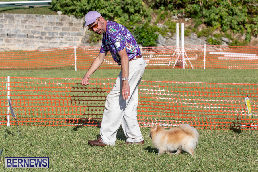 Devils-Isle-All-Breed-Club-2019-Bermuda-International-Dog-Shows-Bermuda-November-2-2019-0772