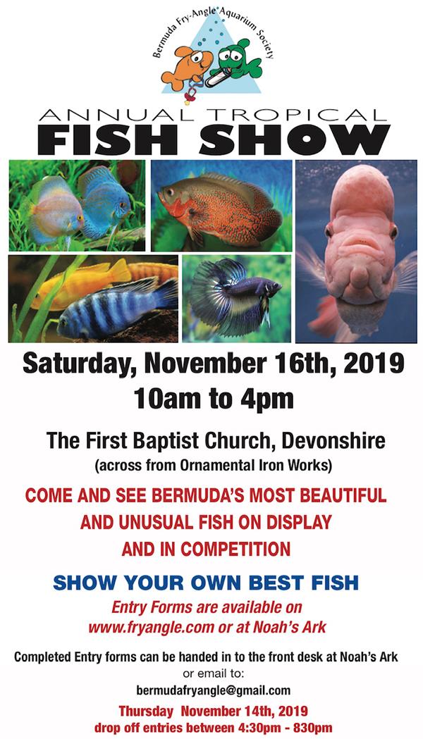 Fry-Angle Aquarium Society Fish Show Bermuda Nov 2019