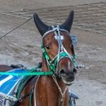 DHPC Harness Pony Racing Bermuda, December 26 2019-5979