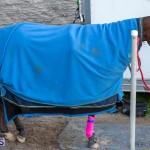 DHPC Harness Pony Racing Bermuda, December 26 2019-6056