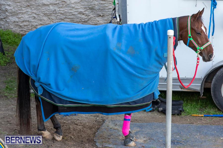 DHPC-Harness-Pony-Racing-Bermuda-December-26-2019-6056