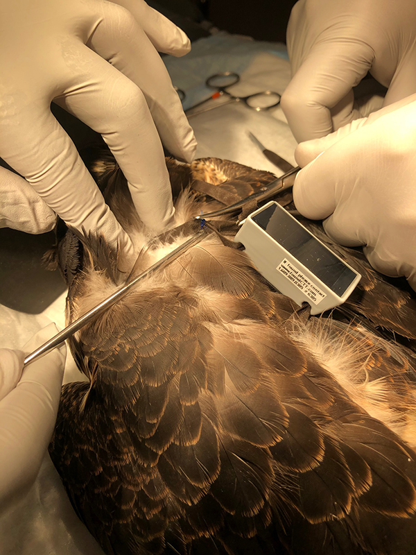 Falcon Rehabilitation Bermuda Dec 17 2019 (5)