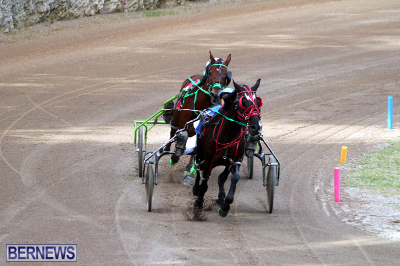 Bermuda-Harness-Pony-Racing-Jan-19-2020-6