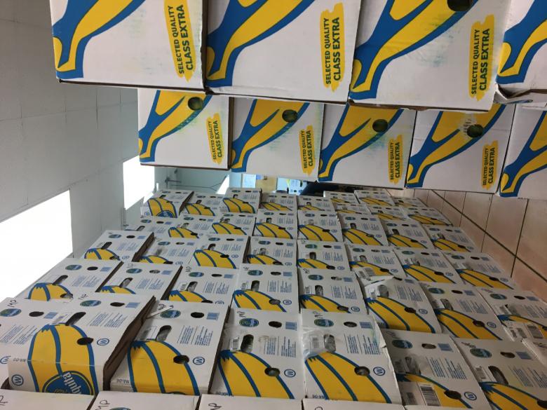 banana Bermuda Jan 31 2020 (4)