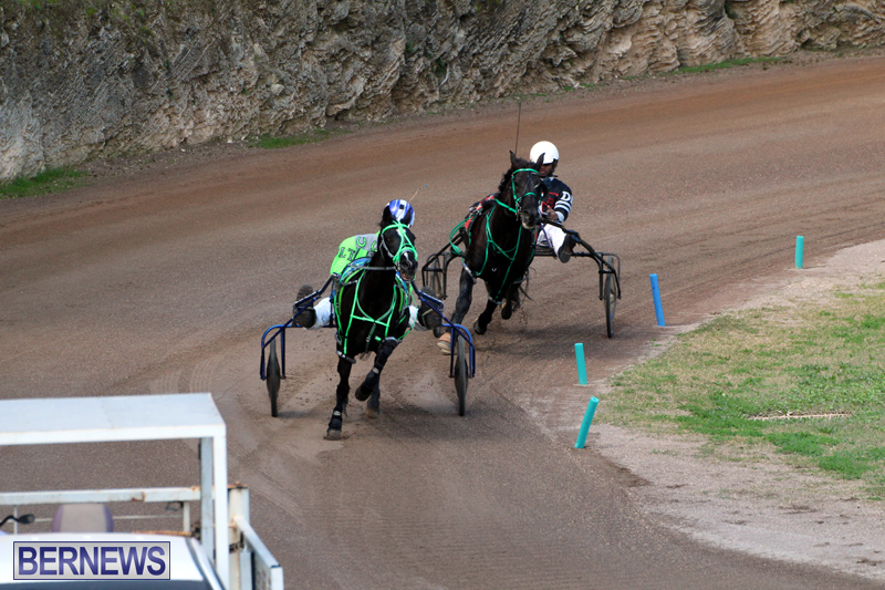 Bermuda-Harness-Pony-Racing-Feb-9-2020-1