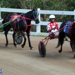 Bermuda Harness Pony Racing Feb 9 2020 (12)