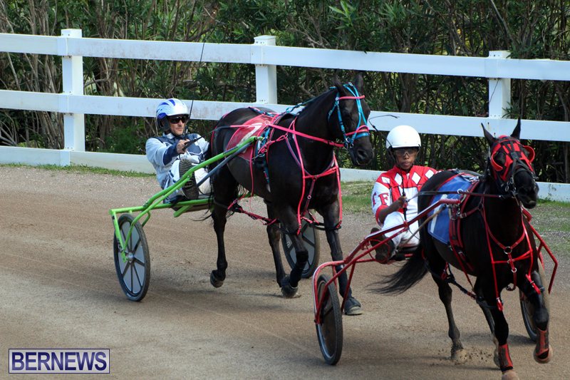 Bermuda-Harness-Pony-Racing-Feb-9-2020-13