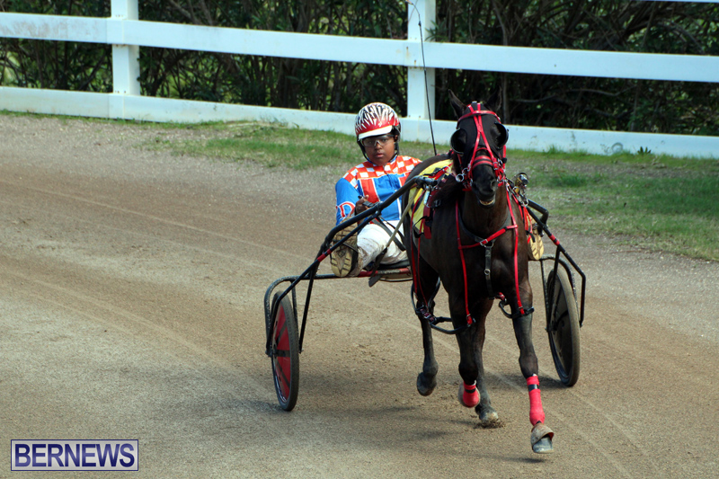 Bermuda-Harness-Pony-Racing-Feb-9-2020-14