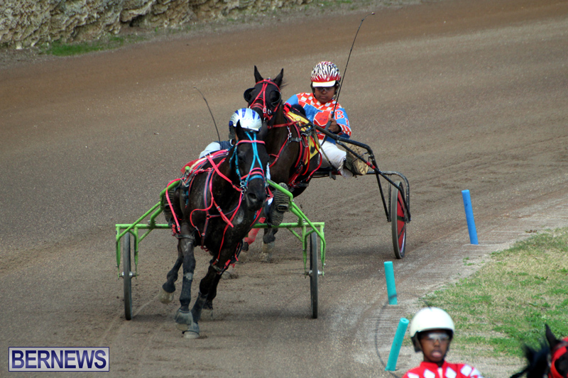 Bermuda-Harness-Pony-Racing-Feb-9-2020-16