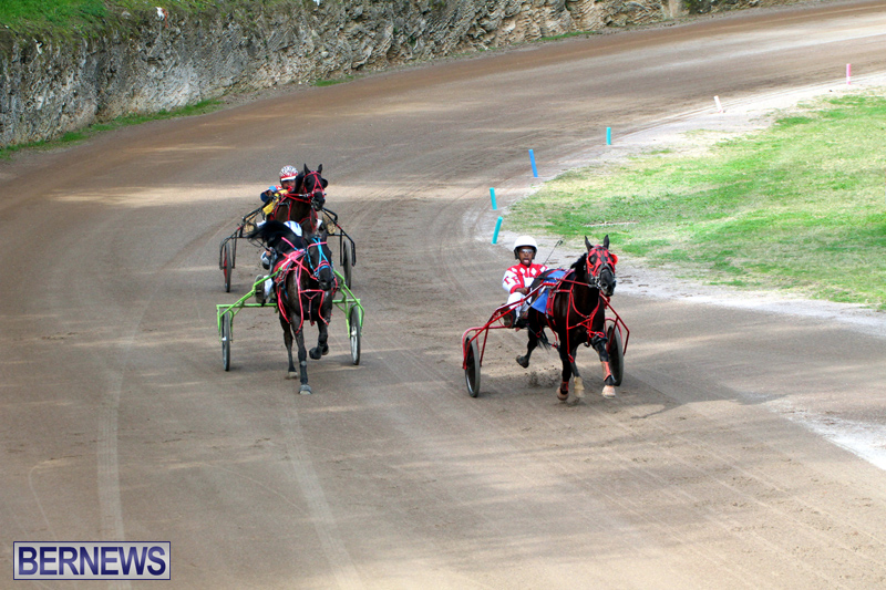 Bermuda-Harness-Pony-Racing-Feb-9-2020-19