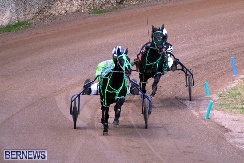 Bermuda-Harness-Pony-Racing-Feb-9-2020-4