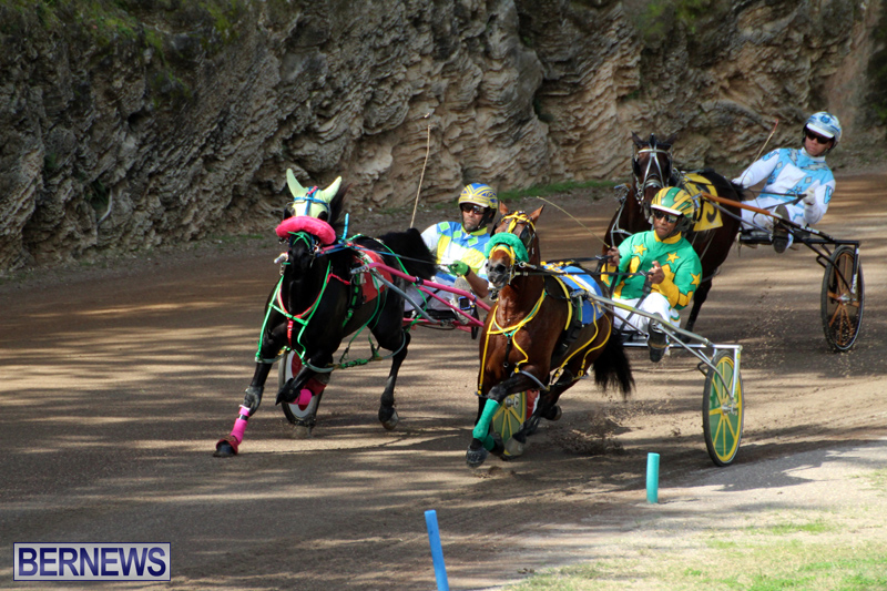 Bermuda-Harness-Pony-Racing-Feb-9-2020-5