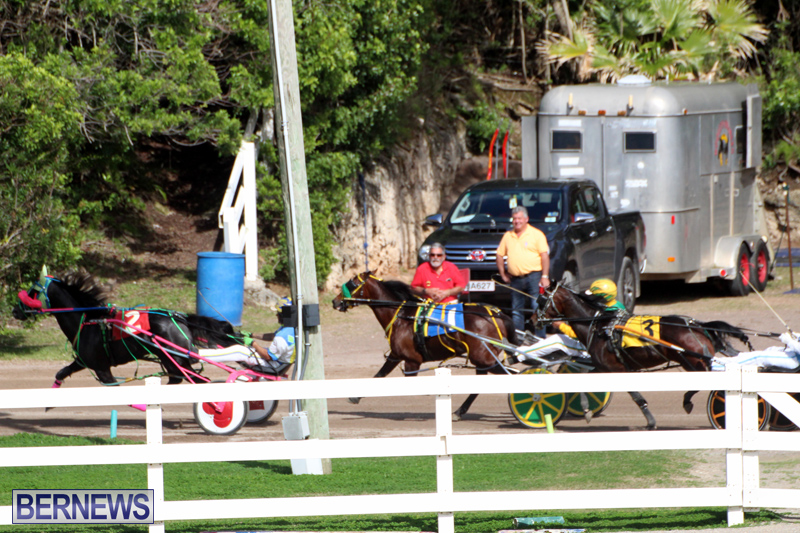 Bermuda-Harness-Pony-Racing-Feb-9-2020-8