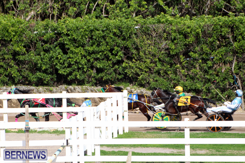 Bermuda-Harness-Pony-Racing-Feb-9-2020-9