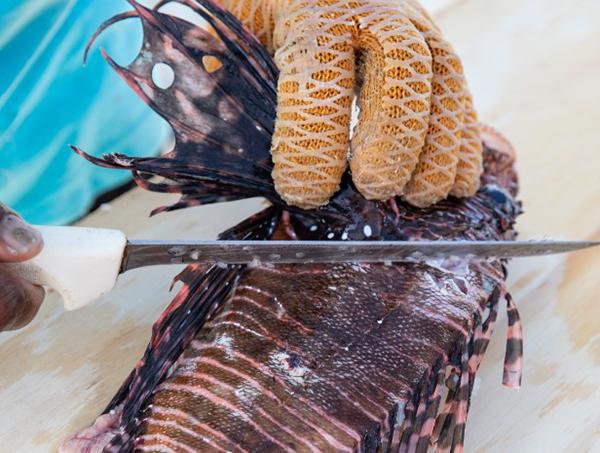 Lionfish Bermuda March 2020